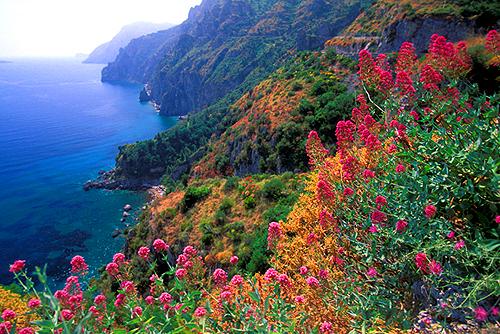 Дикая растительность италии